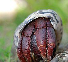 Hermit Crab 4 by Leon Heyns
