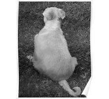 Canine Oesteoarthritis Poster
