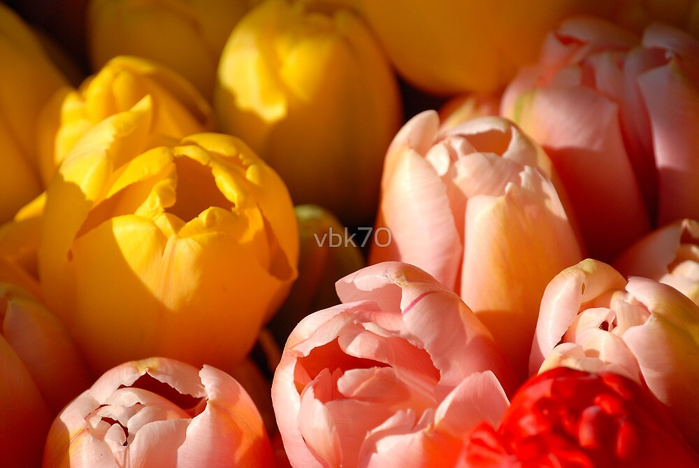 Tulips - Mix by vbk70