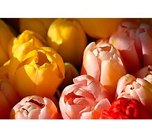 Tulips - Mix Photographic Print