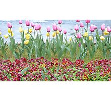 O' Lovely Spring Photographic Print