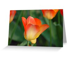 Orange Beauty Greeting Card