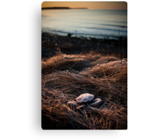Away From Home Canvas Print