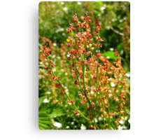 URP(Rumex Acetosa?) - Max Patch, N.C. Canvas Print