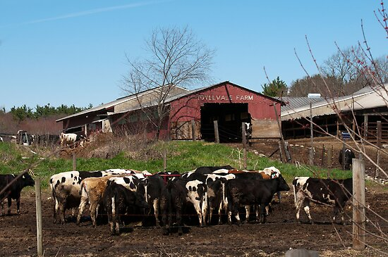 Chow Time on the Farm by Monica M. Scanlan