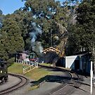 Three in Steam by SherbrookePhoto