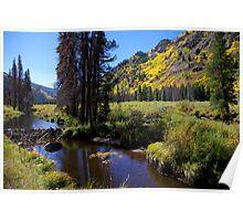 Beaver dam on Homestake Creek Poster