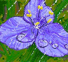 Spiderwort in the rain by Sally O'Dell