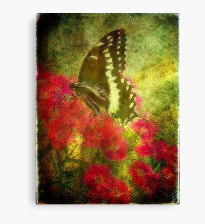 Butterfly Elegance Canvas Print