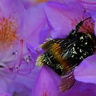 Gathering Pollen by John Hare