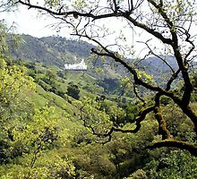 Geothermal Plant - Mayacamas Mountains, Sonoma County, CA by Rebel Kreklow