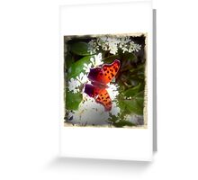 Red Admiral Greeting Card