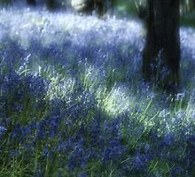 Softly Through The Bluebells by Ann Garrett