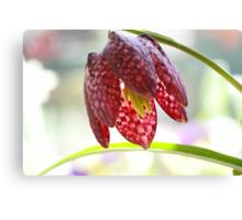Fritillaria flower Canvas Print