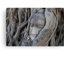 ancient buddha, ayuthaya, thailand Canvas Print