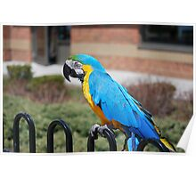 Max the Macaw Poster