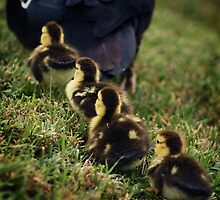 Follow the Leader by Miranda Adria