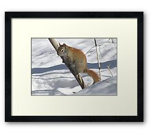 Brrr...it's cold down there! Framed Print