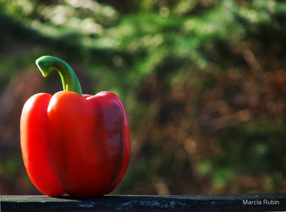 Red Pepper by Marcia Rubin