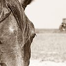 Working Horse by Kristi Johnson