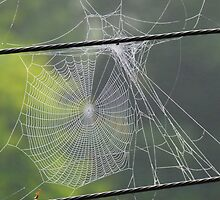 Moral of the Picture - Don't Drink When Building Webs by Tony Mutton