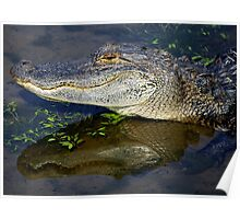 Ally the Alligator in my Pond Poster