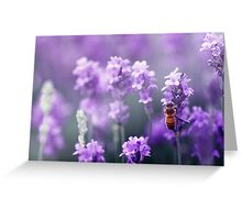 Bee in Lavender Greeting Card