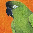 Patagonian Conure - ACEO by Joann Barrack