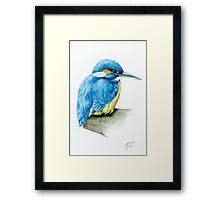 River Kingfisher Framed Print
