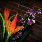 Flowers 2 by rocperk