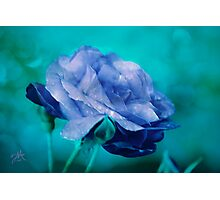 Rose of Blue Photographic Print