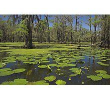 Cypress Swamp Photographic Print