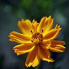 my flower by newcastlepablo