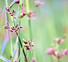 The Beauty Of Weeds by Komang