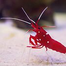 Crayfish by rachomini