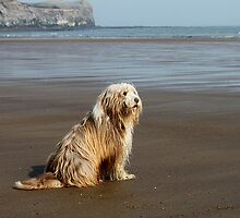 Sea Dog. by Irene  Burdell