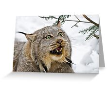 Yeti....Canadian Lynx  Greeting Card