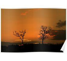 sunburnt trees Poster
