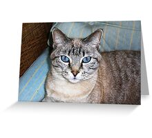 Grymalkin, Magnificent Blue Eyed Silver Tabby Greeting Card