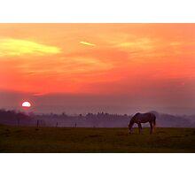 Evening Graze Photographic Print