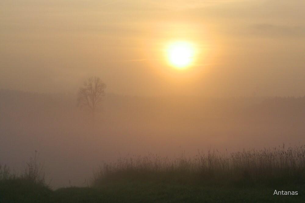 Sunrise in sunrise time by Antanas