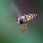 Hoverfly3 by Dustinit
