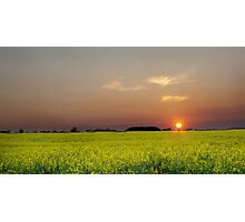 Rape Field At Dusk Photographic Print