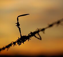 Barbed wire at Sunset by L Spittall