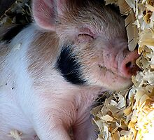 Happy As A Hog by Loree McComb