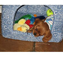 Horatio in his House at 8 weeks Photographic Print