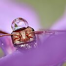 Ant And Drop by VladimirFloyd
