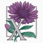 X for Xeranthemum by Stephanie Smith