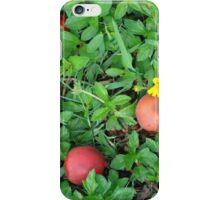 palm fruit iPhone Case/Skin