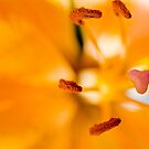 orange flower parts by piwaki
